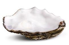 Ostrica fresca isolata con ombra Percorso di ritaglio immagine stock