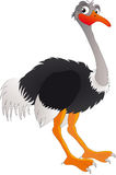 Ostrich. Vector illustration shows gay ostrich Royalty Free Stock Image