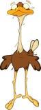 Ostrich vector illustration