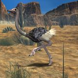 Ostrich-3D Animal Stock Image