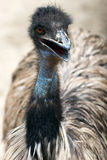 Ostrich. In the wild zoo Stock Photo