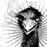 Ostrich. Close-up portrait - vector with grunge background Royalty Free Stock Photography