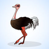 Ostrich. Aviculture and poultry. Royalty Free Stock Photography