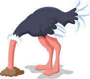 Ostrich cartoon Stock Image