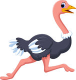 Ostrich cartoon running Stock Image