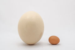 Ostrich and chicken egg Royalty Free Stock Images