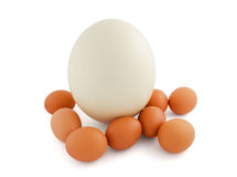Ostrich and chicken eggs isolated on white Royalty Free Stock Photo