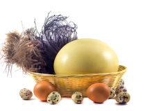 Ostrich, chiken and quail  eggs in a basket Royalty Free Stock Photo