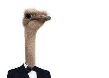 Ostrich in dinner jacket Royalty Free Stock Photo