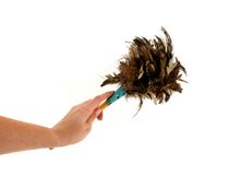 Ostrich Duster on White Stock Image