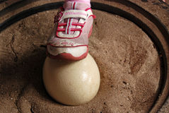 Ostrich egg. A girl step on the ostrich egg Royalty Free Stock Photography
