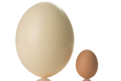 Ostrich egg Royalty Free Stock Photography