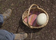 Ostrich egg in basket next to man. Shoes Stock Images
