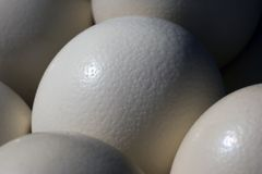 Ostrich Eggs. For sale at a local market Stock Photo