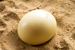 Ostrich eggs Royalty Free Stock Photography