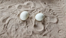 Ostrich eggs. Ostrich, egg, bird, africa animal camelus dandelion, easter embryo, farm, fauna food large life meadow nature nest new nobody object plant sand Stock Photos