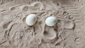 Ostrich eggs Stock Photos