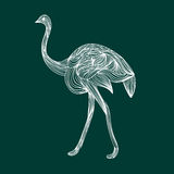 Ostrich on emerald background Royalty Free Stock Photography