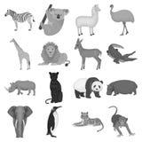 Ostrich emu, crocodile, giraffe, tiger, penguin and other wild animals. Artiodactyla, mammalian predators and animals Royalty Free Stock Photo
