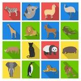 Ostrich emu, crocodile, giraffe, tiger, penguin and other wild animals. Artiodactyla, mammalian predators and animals Royalty Free Stock Photos