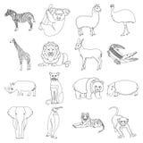 Ostrich emu, crocodile, giraffe, tiger, penguin and other wild animals. Artiodactyla, mammalian predators and animals Stock Photo