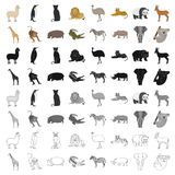 Ostrich emu, crocodile, giraffe, tiger, penguin and other wild animals. Artiodactyla, mammalian predators and animals Stock Photography