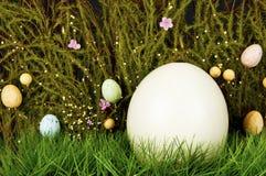 ostrich för ägggräsgreen Royaltyfria Bilder