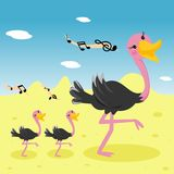 Ostrich family Royalty Free Stock Images