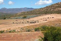 Ostrich farm landscape Stock Photography