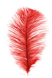 Ostrich feather. Royalty Free Stock Photos