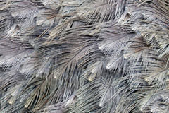 Ostrich feather background Stock Photo