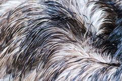 Ostrich feather background. Royalty Free Stock Photos