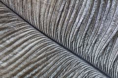 Ostrich feather. Macro image of an ostrich feather Stock Photography