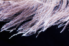 Ostrich feather plume isolated on black background Stock Photos