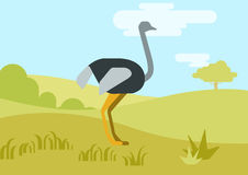 Ostrich flat design cartoon vector wild birds. Ostrich flat design cartoon vector wild animals birds. Flat zoo nature children collection Stock Photos