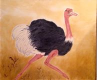 Ostrich ,Flightless bird Black white feather royalty free stock photos