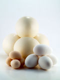 Ostrich, goose and hen's egg Royalty Free Stock Image