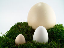 Ostrich, goose and hen's egg Stock Image