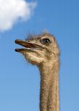 Ostrich head. Against the blue sky with white cloud Royalty Free Stock Photo