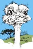 Ostrich head Stock Photo