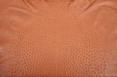 Ostrich leather Royalty Free Stock Photos