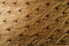 Ostrich Leather. Texture of  orange-brown ostrich leather Royalty Free Stock Image