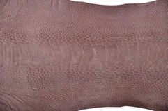 Ostrich leg leather Stock Photography