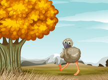 An ostrich near the big tree Stock Photography