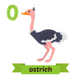 Ostrich. O letter. Cute children animal alphabet in vector. Funn Stock Photos