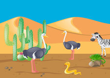 Ostrich and other animals in desert. Illustration Stock Images
