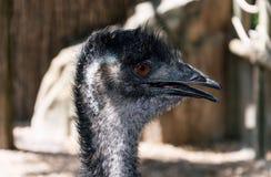 Ostrich Portrait lizenzfreies stockfoto