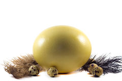 Ostrich and quail eggs royalty free stock images