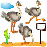 Ostrich runs, covers head sand and cost(stand) Stock Image