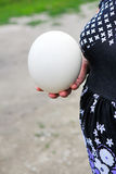Ostrich's egg. Big egg of  ostrich in female hand Royalty Free Stock Photo